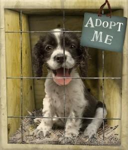 Puppy adopteren
