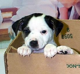 Puppies gratis af te halen