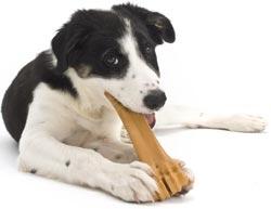 Afbeeldingsresultaat voor honden metbot