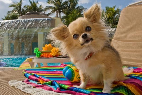 gul og gratis hunde