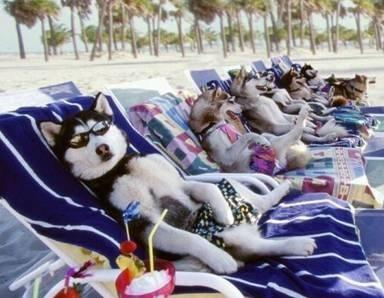 Afbeeldingsresultaat voor hond vakantie