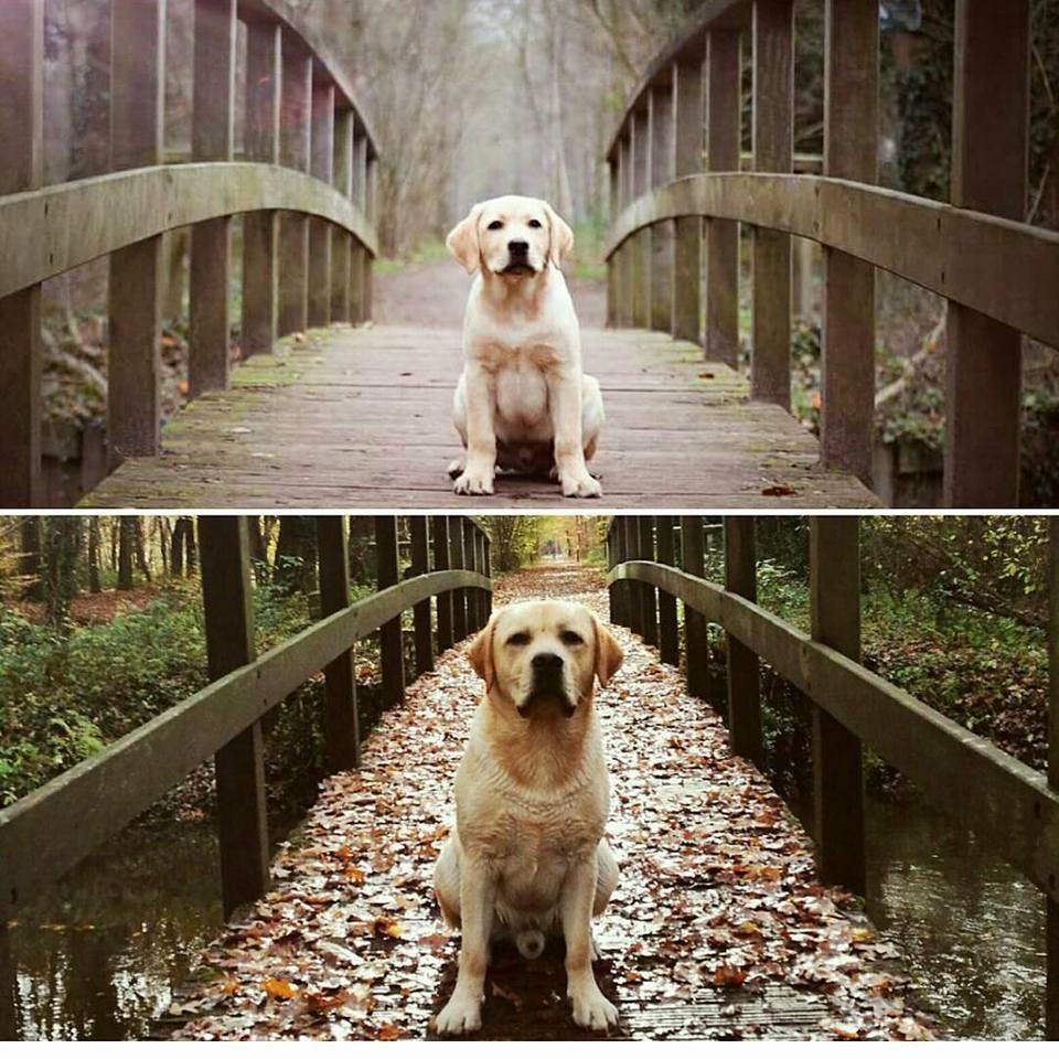 9f2dcfc0e24afa Show ook je hond naar hondenshow