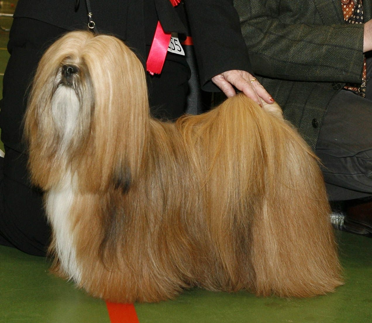 Image result for hondenras show extreem veel haar