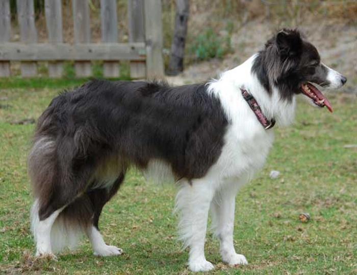 gedrag hond 9 maanden