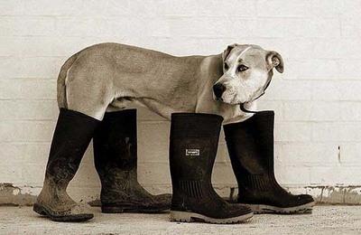 Soorten Honden Klein Soorten Honden